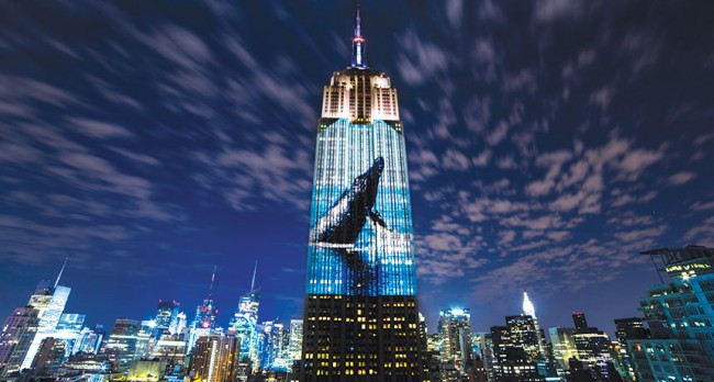 Racing Extinction Documentary Projected on Buildings